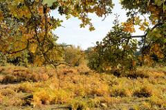 Strahlende Herbstfarben im Naturschutzgebiet Höltigbaum, herbstlich gefärbte Eichenblätter und Farne  - Herbstbilder aus dem Hamburger Stadtteil Rahlstedt.