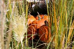 Herbst auf dem Blankeneser Wochenmarkt; zwischen hohen Gräsern werden große Kürbisse zum Verkauf angeboten.