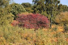 Herbst in der Hansestadt Hamburg - gelbes Herbstlaub und ein Strauch mit roten Beeren im Naturschutzgebiet Höltigbaum im Stadtteil Rahlstedt.