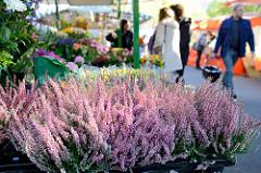 Wochenmarkt in Hamburg Barmbek Nord / Hartzloh; Blumenstand mit violett blühender Heide..