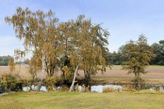 Birken mit gelben Herbstblättern stehen am Ufer der Gooseelbe; dahinter abgeerntete Felder.