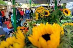 Wochenmarkt im Hamburger Stadtteil Barmbek Nord, Blumenstand mit Sonnenblumen / Helianthus annuus.