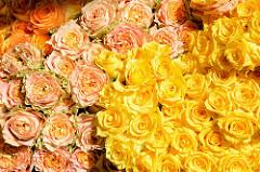 Wochenmarkt im Hamburger Stadtteil Groß Flottbek / Osdorfer Landstraße  - Blumenstand mit frischen gelben und lachsfarbenen Rosen,