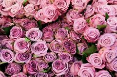 Rosenstand mit frischen Rosen auf dem Wochenmarkt im Hamburger Stadtteil Blankenese.