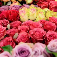 Rosenstand mit bunten frischen Rosen auf dem Wochenmarkt im Hamburger Stadtteil Blankenese.
