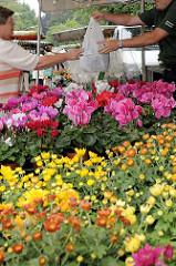 Wochenmarkt im Hamburger Stadtteil Bergedorf - Blumenstand mit blühenden Pflanzen an der  Chrysanderstraße.