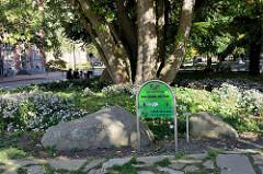 Grünanlage  Max Schmeling Park am Rathausplatz von Hamburg-Harburg.
