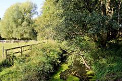 Lauf vom Mühlenbach entlang einer Weide im  Naturschutzgebiet Mühlenbachtal bei Trittau.