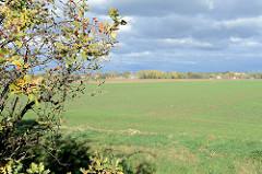 Wiesen und Felder in Hamburg Neuallermöhe, auf diesem 120 Hektar großen Areal soll bis 2030 das Wohngebiet Oberbillwerder mit 5000 - 7000 Wohnungen entstehen.