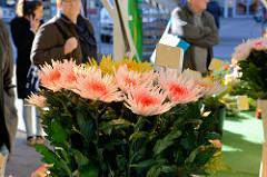 Blumenstand auf dem Wochenmarkt In Hamburg Neuallermöhe / Fleetplatz.