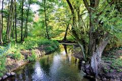 Naturschutzgebiet Mühlenbachtal bei Trittau. Bäume stehen dicht am Ufer vom Mühlenbach.