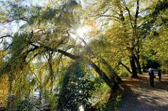 Spaziergang am Ufer vom Außenmühlenteich im Harburger Stadtpark; Weidenbäume stehen schräg über dem Seeufer die tief stehende Herbstsonne strahlt durch die Zweige.