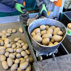 Kartoffelstand auf dem Hamburger Wochenmarkt Farmsen-Berne; ein Markthändler stellt Gewichte auf eine Waagschale, um die Kartoffeln abzuwiegen.
