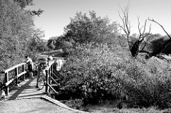 Schmale Holzbrücke über den kleinen Fluss Flottbeck im Naturschutzgebiet Flottbeck Tal im Jenischpark von Hamburg Othmarschen.