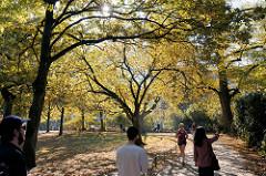 Herbst in der Hansestadt Hamburg, Besucherinnen der Grünanlage am Weiher in Eimsbüttel  joggen,  fahren Fahrrad oder gehen unter den Herbstbäumen spazieren.