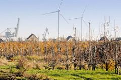 Blick auf eine Apfelplantage im Herbst im Hamburger Stadtteil Finkenwerder; im Hintergrund Windkraftanlagen und Kräne an der Dradenau.