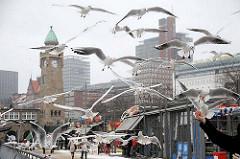 Bilder von Hamburg im Winter - Möwen füttern an den Landungsbrücken.