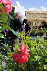 Wochenmarkt im Hamburger Stadtteil Lohbrügge - Stand mit Blumen, blühenden Rosen auf dem Lohbrügger Marktplatz.