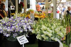 Wochenmarkt im Hamburger Stadtteil Bergedorf - Stand mit frischen Schnittblumen an der  Chrysanderstraße.