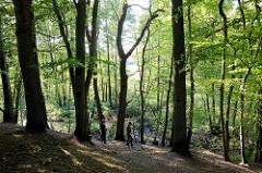 Naturschutzgebiet Mühlenbachtal bei Trittau. Hang mit Bäumen,  unten fließt der Mühlenbach.