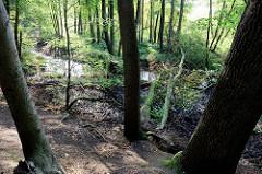 Naturschutzgebiet Mühlenbachtal bei Trittau. Hang mit Bäumen, die teilweise über den unten verlaufenden Mühlenbach gestürzt sind.