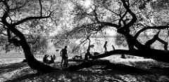 Elbstrand in Hamburg Othmarschen, die Zweige und Äste einer mächtigen Weide haben sich in den Sand geneigt und dienen Kindern zum Spiel im Schatten.