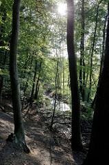 Naturschutzgebiet Mühlenbachtal bei Trittau. Gegenlichtaufnahme,  die Sonne strahlt durch die Zweige der Bäume - unten verläuft der Mühlenbach.