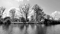 Ufer der Hohensaaten-Friedrichsthaler Wasserstraße, die durch den Nationalpark Unteres Odertal führt. Abgestorbene Bäume stehen im Wasser, Schilf und Sträucher bilden ein dichtes Gestrüpp.