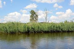 Ufer von der Hohensaaten-Friedrichsthaler Wasserstraße die durch den  Nationalpark Unteres Odertal führt; Schilf und abgestorbene Bäume stehen am Ufer des Kanals.