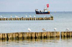 Holzbuhnen  am Strand von Boltenhagen / Ostsee, Möwen sitzen auf den Holzpfählen im Wasser; im Hintergrund ein Fischkutter mit roten Fahnen vor Anker.
