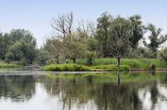 Auenlandschaft an der Havel bei Rathenow; abgestorbene Bäume und dichtes Schilf säumen das Havelufer.