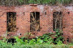 Ruine eines Ziegelgebäudes - Speichers in Havelberg, vertrocknetes Gebüsch in den Fensterhöhlen.