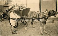 Großer Arbeitshund mit Zuggeschirr in Belgien; das Arbeitstier wird von einem Kind gehalten - auf der zweirädrigen Karre stehen Metall-Kannen.