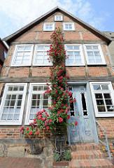 Denkmalgeschütztes Wohnhaus / Fachwerkhaus in der Hollstraße von Güstrow; ein rotblühender Rosenstock wächst an der Hausfassade fast bis zum Dach.