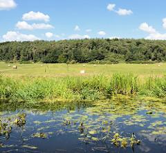 Wiesen am Ufer des Finowkanals - im Hintergrund Wald.