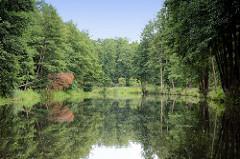 Ruhe und Entspannung auf dem Finowkanal in Brandenburg - dicht stehen die Bäume am Kanalufer.