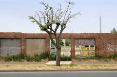 Alte Gewerbefläche / Industriebrache einer Speicherstraße Güstrow - teilweise vernagelte Fensteröffnung, einsamer Baum.