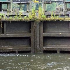 Mit Grünpflanzen / Wildkraut bewachsenes Stemmtor / Schleusentor der Schleuse Leesenbrück am Finowkanal.