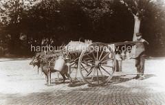 Ein Schäferhund / Arbeitshund zieht einen Karren, an dem unterschiedlich große Milchkannen hängen - der Hamburger Milchhändler lenkt das Fuhrwerk.