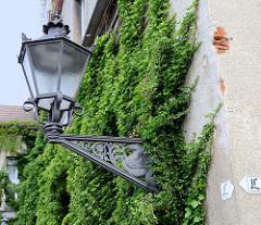Schmiedeeiserne Laterne mit geflügelten Pferd als Schmuckdekor an einer efeubewachsenen Rauputzfassade am Roßplan in der Stadt Altenburg.