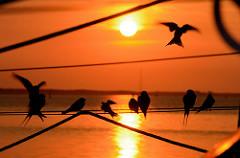 Sonnenaufgang an der Ostsee in der Marina Barhöft - Vögel sitzen auf den Seilen eines Segelbootes.