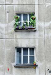 Wohnhausanlage der Gemeinde Wien - errichtet in den Jahren 1949 - 1950. Wohnhausanlage in der Blechturmgasse - Architekt Josef Hoffmann. Hoffmann war Mitbegründer der Wiener Secession und war ab 1899 Professor an der Kunstgewerbeschule.