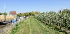 Fotos vom Hamburger Stadtteil Neuenfelde, Bezirk Hamburg Mitte. Apfelplantage mit blühenden Bäumen, links ein Seitenarm der Este, der als Sportboothafen genutzt wird