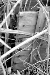 Bilder aus dem Hamburger Stadtteil Billbrook - von Brombeeren überwucherte alte Holzkiste am Straßenrand der Berzeliusstraße.