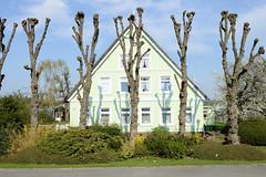 Bäuerliches Anwesen - Wohnhaus mit Kopflinden am Gauerter Hauptdeich in Hamburg Ochsenwerder.