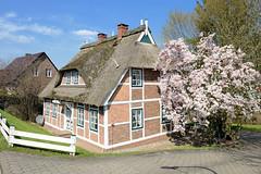 Reetgedecktes Fachwerkhaus am Kirchwerder Elbdeich im Hamburger Stadtteil Kirchwerder - blühender Tulpenbaum.