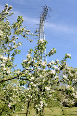 Bilder aus dem Hamburger Stadtteil Billbrook - Strommast einer Überlandleitung und blühender Apfelbaum einer Streuobstwiese am unteren Landweg.