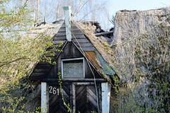 Verfallenes Wohnhaus mit eingestürztem Reetdach im Moorfleeter Deich in Hamburg Moorfleet.