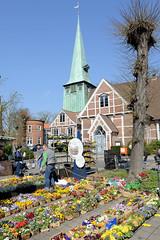 Frühlingsmarkt in Hamburg Bergedorf; Marktstand mit Blumen - im Hintergrund die Kirche St. Petri und Pauli.