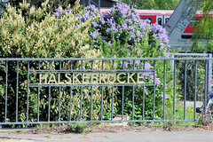 Fotos von Hamburgs Stadtteil Billbrook, Bezirk Hamburg Mitte - Schriftzug der Halkebrücke am Brückengeländer, dahinter blühen Flieder und Kirschlorbeer - eine S-Bahn überquert den Tidekanal.